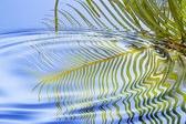 מים לחקלאות: לא מה שחשבתם